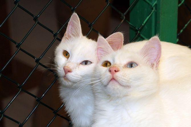 Van Kedi Villası'nda beş yıldızlı konfor galerisi resim 2