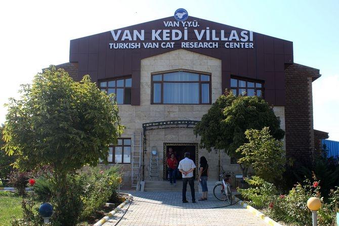 Van Kedi Villası'nda beş yıldızlı konfor galerisi resim 5