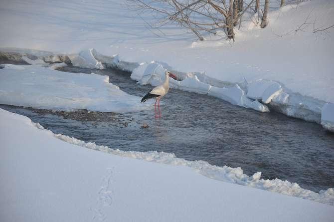 Yüksekova'da kar manzaraları galerisi resim 14