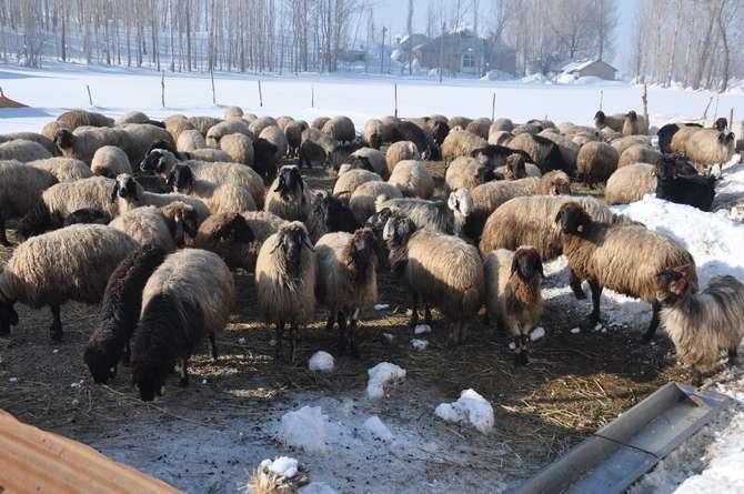 Yüksekova'da kar manzaraları galerisi resim 4