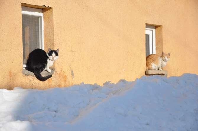 Yüksekova'da kar manzaraları galerisi resim 8