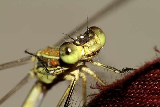Doğanın küçük canlıları galerisi resim 24