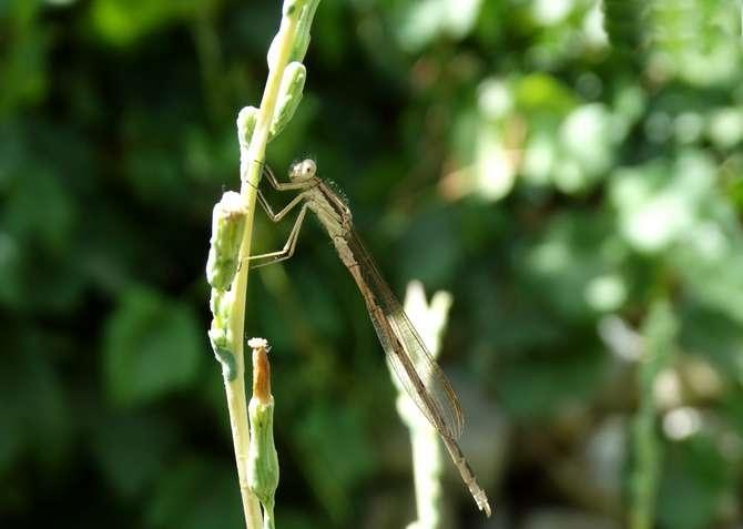 Doğanın küçük canlıları galerisi resim 8