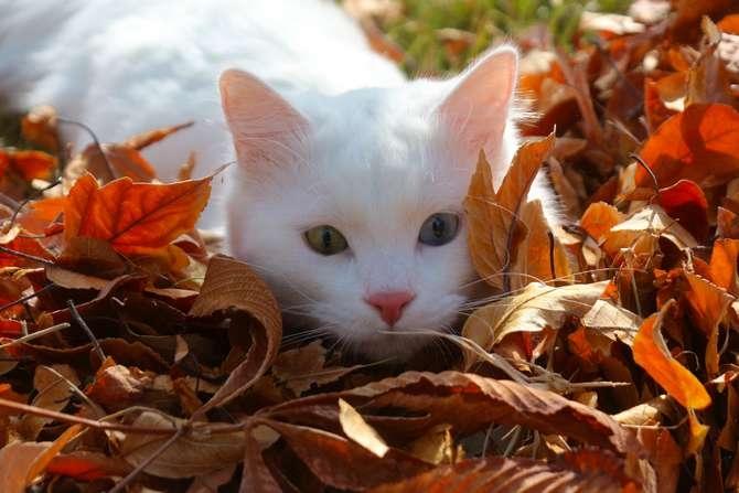 Van kedilerinin popülerliği arttı galerisi resim 9