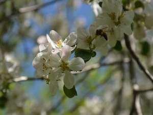 Çiçek açan ağaçlarda görsel şölen