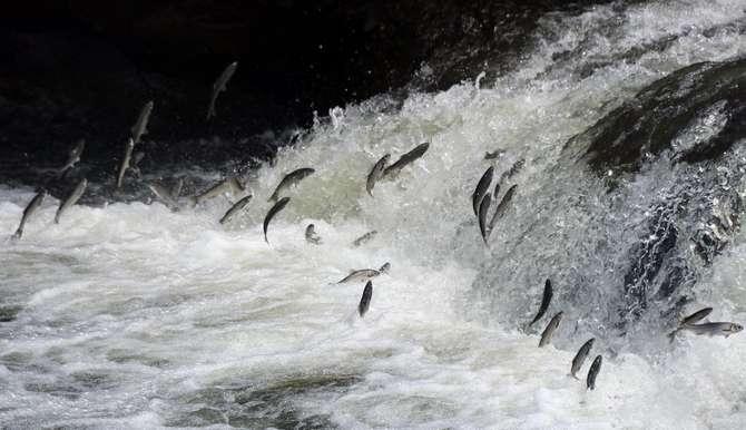 Uçan balıkların görsel şöleni galerisi resim 1