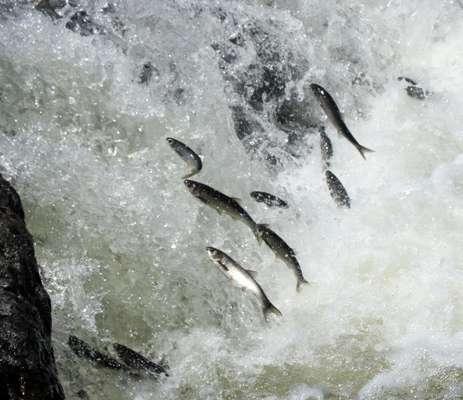 Uçan balıkların görsel şöleni galerisi resim 2