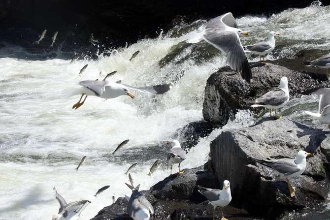 Uçan balıkların görsel şöleni galerisi resim 6