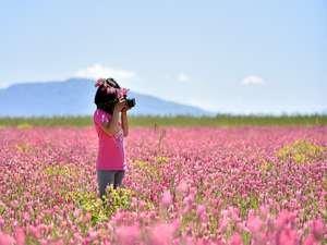 Van Gölü çevresi çiçeklerle renklendi