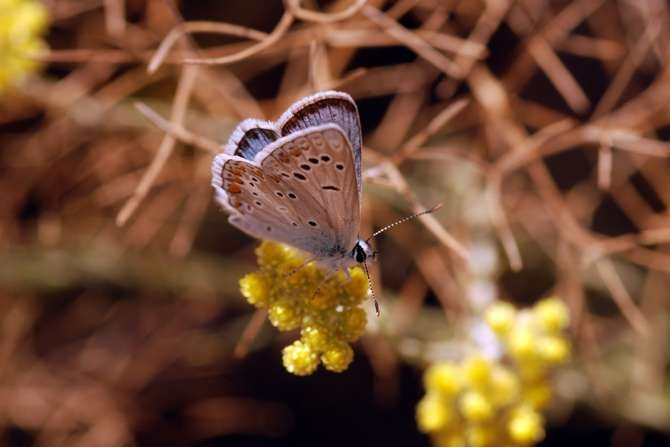 kelebekler risk altında galerisi resim 1