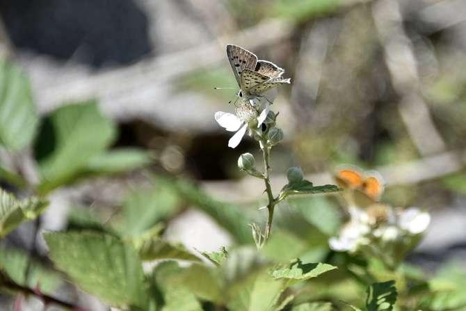 kelebekler risk altında galerisi resim 4