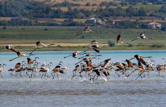 Flamingoların eşsiz dansı galerisi resim 1