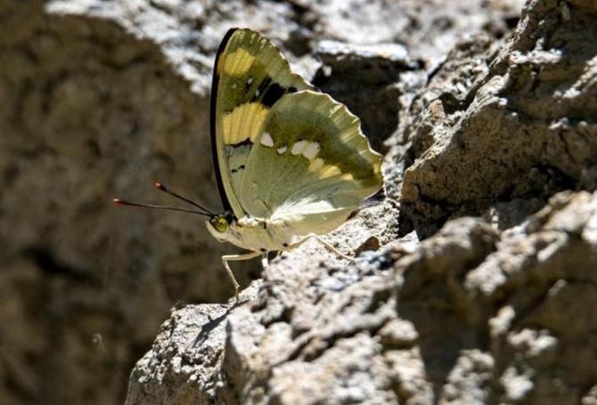 Renkli Kelebek Dünyası galerisi resim 2