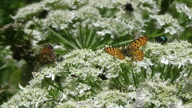 Renkli Kelebek Dünyası galerisi resim 7