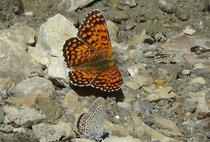 Renkli Kelebek Dünyası galerisi resim 8