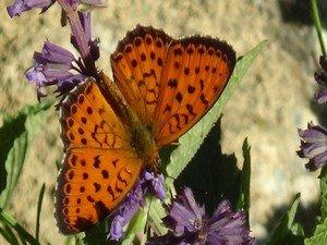 Renkli Kelebek Dünyası