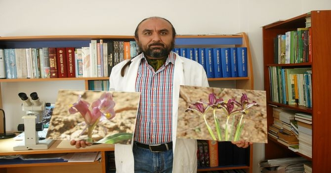 Hakkari'de iki yeni süsen bitkisi keşfedildi galerisi resim 8