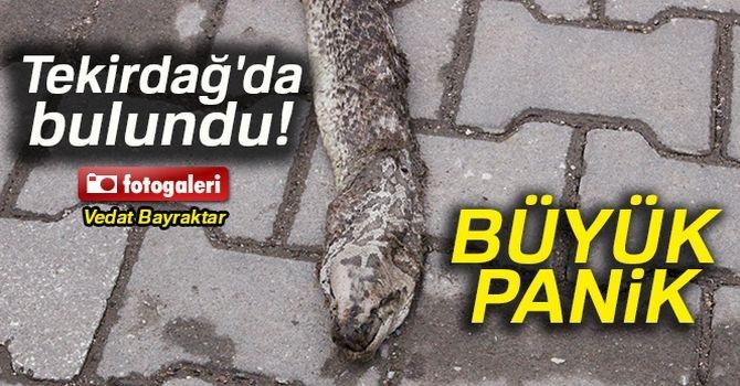 Dev yılan paniği galerisi resim 1