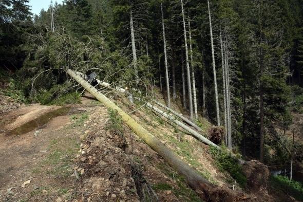 Ağaçlar fırtınanın şiddetine dayanamadı galerisi resim 2