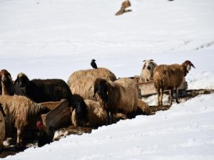 Faraşin Yaylasında kış hayatı