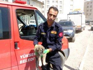 Mahsur kalan yavru köpek kurtarıldı
