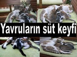 HUZUR VEREN FOTOĞRAF KARELERİ...