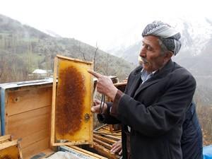 Şemdinli'deki arı ölümleri endişelendiriyor!