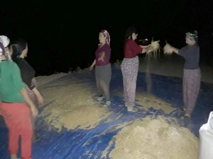 Sınır'da buğday temizleme telaşı başladı!