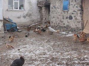 Kuş gribi şüphesi: Binlerce kanatlı hayvan itilaf edildi!