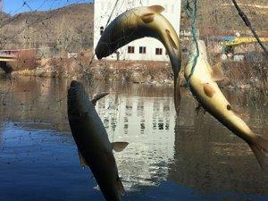 Eksi 5 derecede balık avı