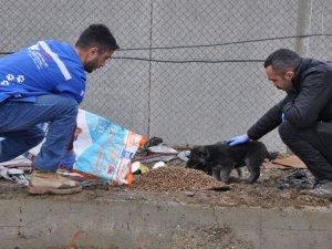 Sokak Hayvanlarına Mama Bırakıldı!