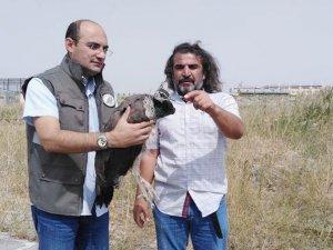 Tavus kuşu tedavi altına alındı
