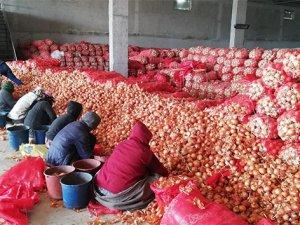 Soğanı fiyat artırmak için depoya hapsettiler