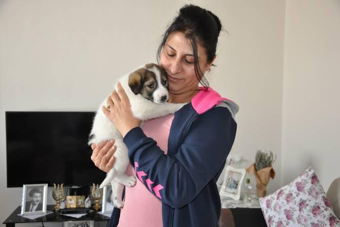 Donmak üzere olan yavru köpeğe anne şefkati