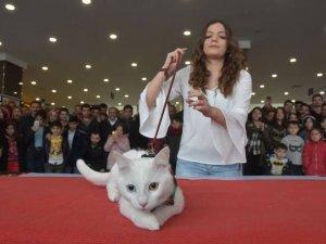 'Van Kedisi Güzellik Yarışması' yapıldı