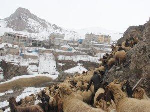 Hakkari'de tahrip olan ahırda 300 hayvan tehlikede