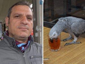 Çay tiryakisi papağan