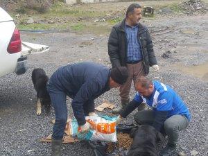 Veteriner ekipleri sokak hayvanlarına yem bıraktı