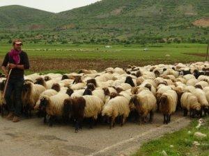 Göçerlerin zorlu Ramazan mesaisi başladı
