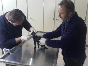 Ayakları kırılan yavru kedi sağlığına kavuştu