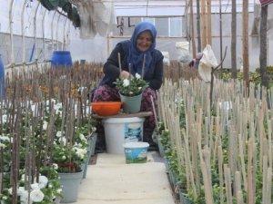 Çiçek tohumları para basıyor...