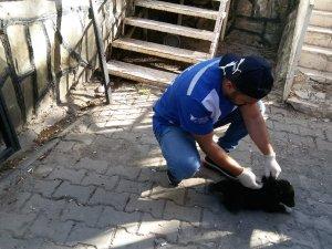 Sahipsiz hayvanlar sağlık taramasından geçirildi