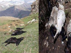 Hakkari'de yıldırım düştü:Hayvanlar telef oldu