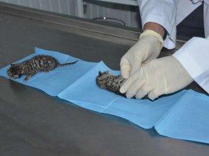 Yaralı yavru kediler için gece seferberliği