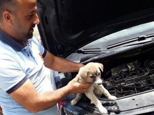 Arabanın motor bölümüne sıkışan köpek kurtarıldı