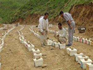 Üretilen ana arılar bölge illerine satılıyor
