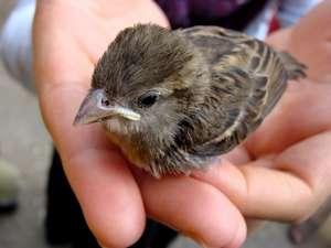 Hakkari yuvada düşen serçe kuşları için seferber oldu