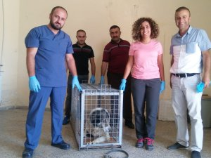 Hakkari'de yürümeyen köpek sağlığına kavuşturuldu