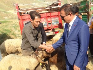 Hakkari'de 987 küçük baş hayvan dağıtıldı
