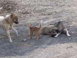 Sevimli hayvanların oyunu göz kamaştırdı